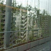 京橋こども園7