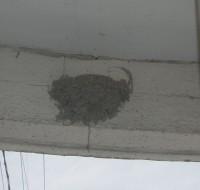 ガリバーのツバメの巣