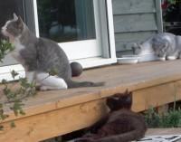 サーフの猫達